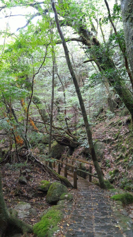 屋久島交通-白谷雲水峽