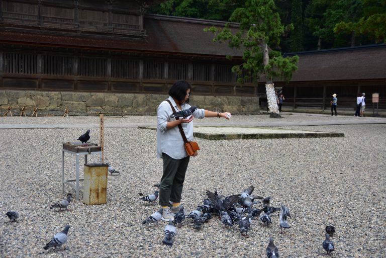 出雲大社-出雲大社與和平白鴿