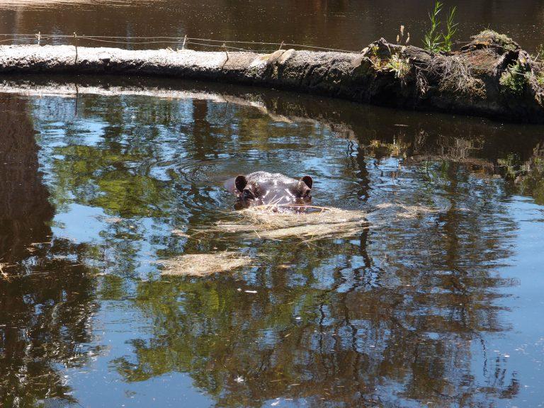 墨爾本景點-墨爾本自由行-melbournetour-河馬小姐在暢泳