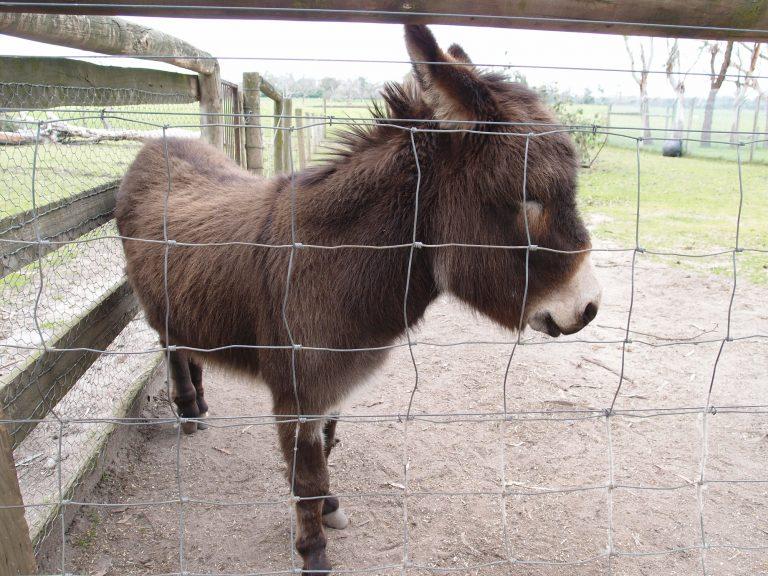 墨爾本景點-墨爾本自由行-melbournetour-憂鬱的驢仔,是不是有心事