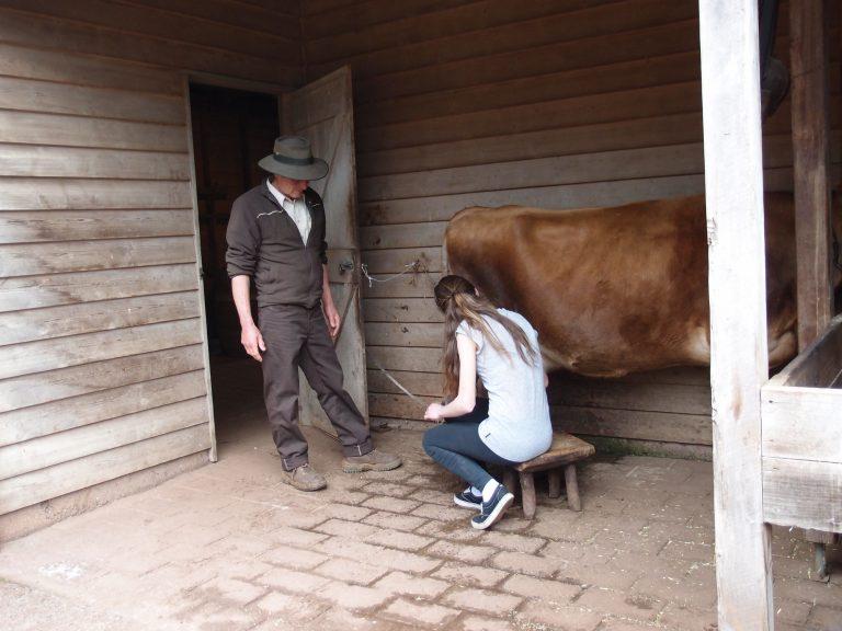 墨爾本景點-墨爾本自由行-melbournetour-擠牛奶體驗