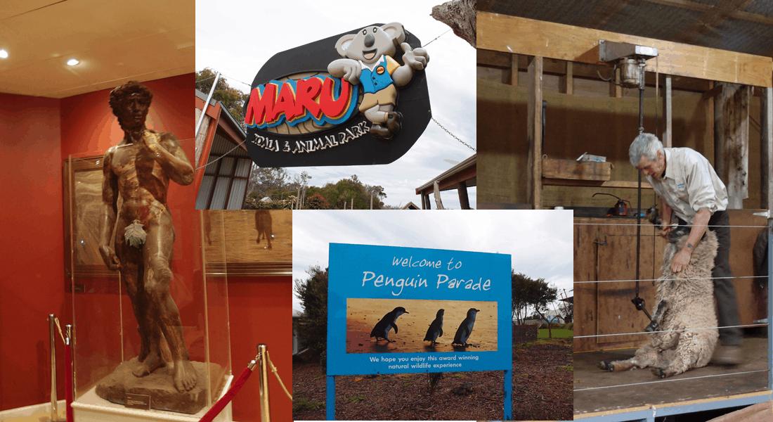 墨爾本自由行!墨爾本郊區5大必遊熱門景點Melbourne Tour – Phillip Island 企鵝島