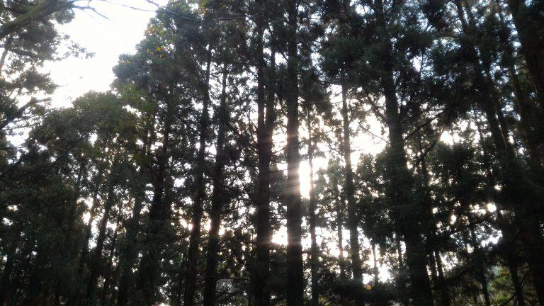 屋久島登山-屋久島旅行-繩文杉