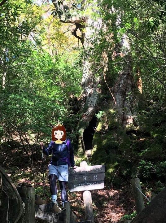 屋久島登山-屋久島旅行-繩文杉-yakushima_tree