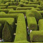 墨爾本自助-迷宮的籬笆比成年人還要高(網上圖片)