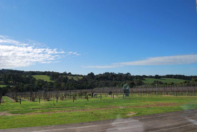 墨爾本自助-穿梭於葡萄園,令我想起當年剪葡萄的經驗