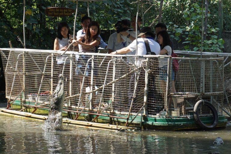 cangio-feed-crocodile-goflyla