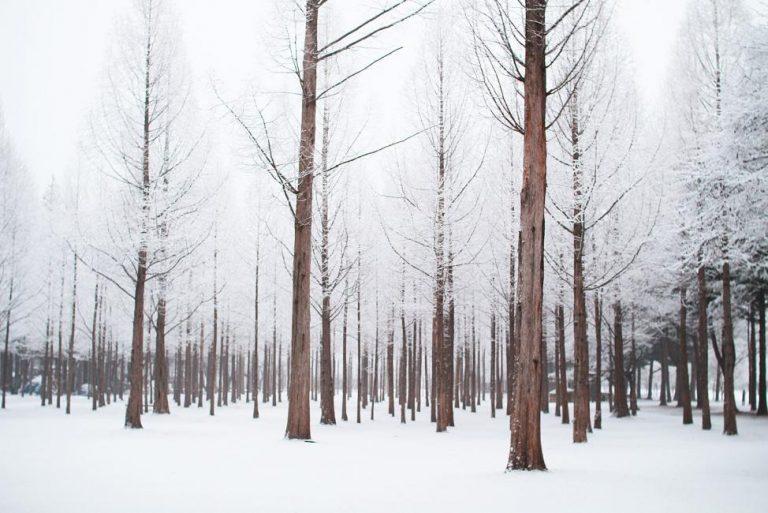 【KKday獨家】冬季限定南怡島二日遊(首爾出發)