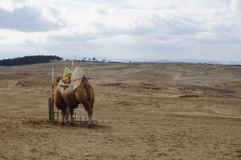 zuzuche-car-rental-tottorisakyu-camel-goflyla