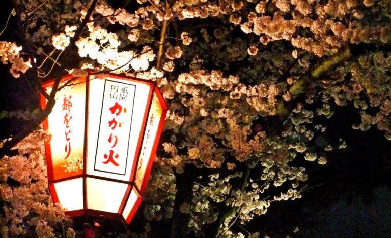 【京都賞夜櫻】高台寺、清水寺夜間點燈、祇園圓山公園、花見御膳