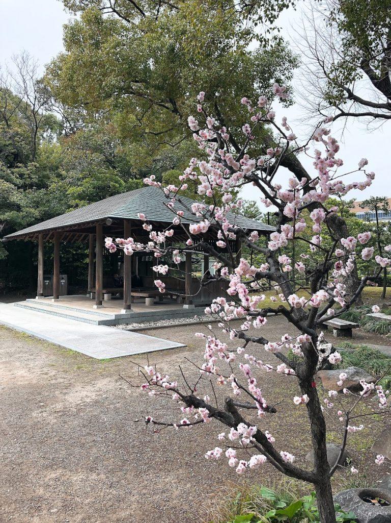 kiyosumi-shirakawa-tree-goflyla